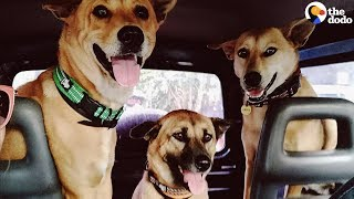 Nothing Makes This Couple Happier Than Adopting Street Dogs   The Dodo by The Dodo