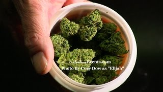 MMPR Review Show - MedReleaf Cannabis Strain Cognitiva by Medical Marijuana Review Show