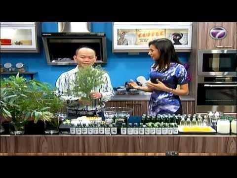 Tea Tree Essential Oils - NTV7 Bella-01 [Essential Oil Malaysia]