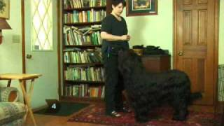 Dog Training - How To Teach Your Dog To Speak