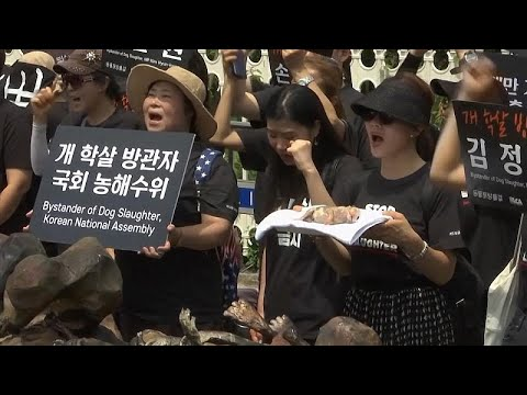Südkorea: Demo gegen Hunde-Schlachten - Blumen für die toten Hunde