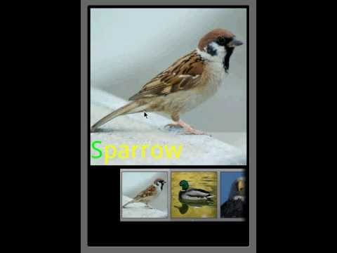 Video of Bird Sounds & Ringtones