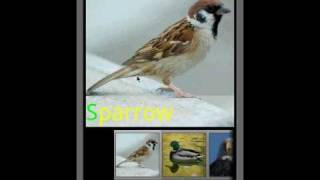 Bird Sounds & Ringtones YouTube video