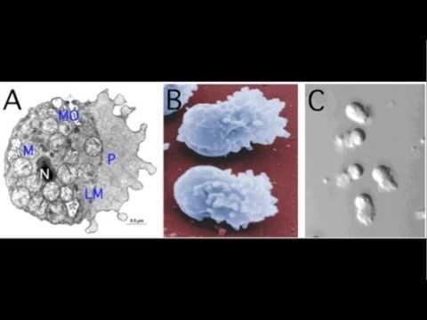 Dr. Andy Singson - Fortpflanzungserfolg Modellorganismus C. elegans