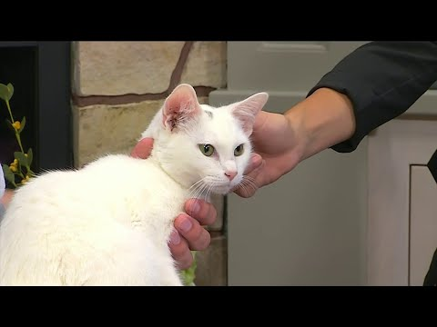 Roanoke Valley SPCA Pet of the Week:  Meet Blanco!