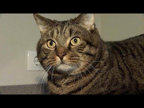 Η υπέρβαρη γάτα που «εκνεύρισε» την Aeroflot
