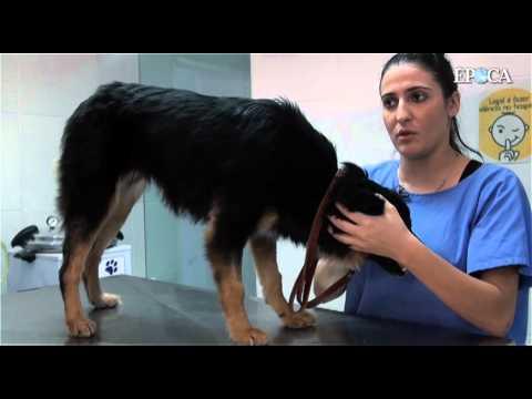 Primeiros socorros de animais - O que fazer em casos cortes e ferimentos?