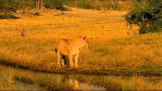 Nonton The Last Lions    2011 Trailer Film Subtitle Indonesia Streaming Movie Download