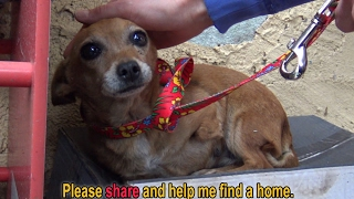 A sick three legged dog sleeps in the rain on a shoebox and waits months to be rescued
