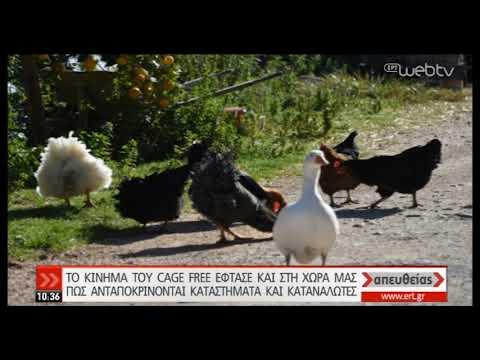 Προμήθεια αυγών από πουλερικά που ζουν εκτός κλουβιών | 04/12/2019 | ΕΡΤ
