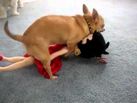 XxX Hot Indian SeX Chihuahua hump Betty.3gp mp4 Tamil Video