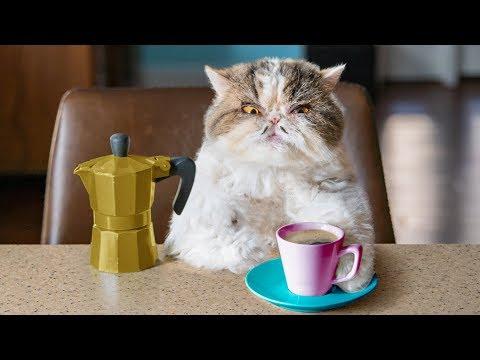 Aaron s Animals Catfinated When Cats Drink
