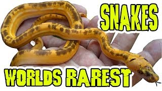 Rarest Pet Snakes In The World by Prehistoric Pets TV