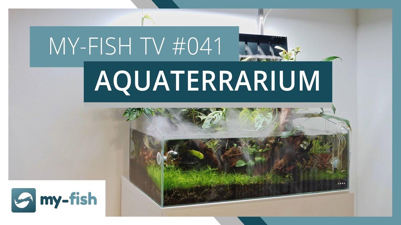 my-fish TV - Deine Nr. 1 Anlaufstelle für alle Themen rund um die Aquaristik 23