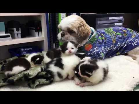 moon-il-cane-papa-surrogato-di-oltre-700-gattini