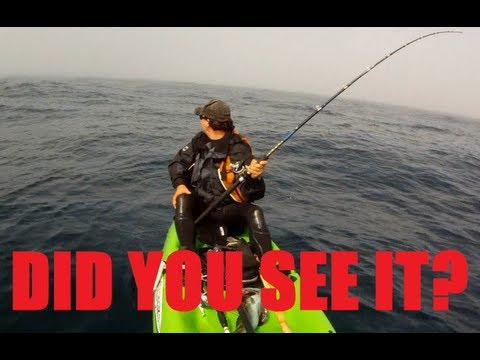 weird marine animals - http://www.youtube.com/Brandonkop While out fishing the Wild Big Sur Coast I was surrounded by dense fog not able to see the shore or anything else. On my ka...