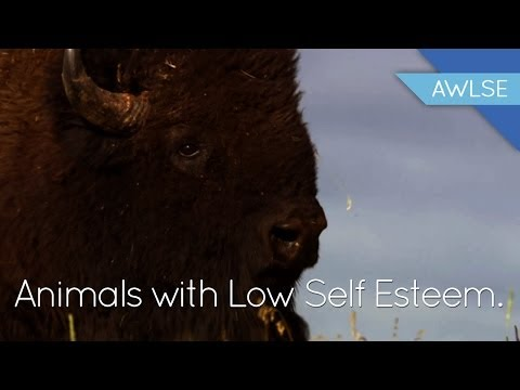 Bison With Low Self Esteem: The End