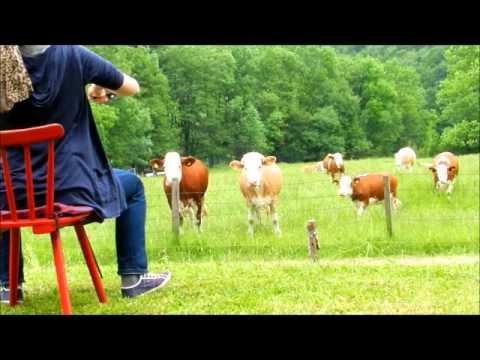 Harriet Krijgh - Cows´ Story 2012
