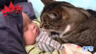 Download Lagu Cats Love Babies Compilation    CFS   YouTube 720p1 Mp3