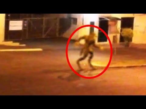 العرب اليوم - شاهد: مخلوقات أسطورية حقيقية تم تصويرها