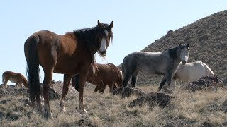 Nonton The Story of America's Wild Horses and Burros Film Subtitle Indonesia Streaming Movie Download