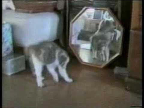 non avete mai visto dei gatti così :)
