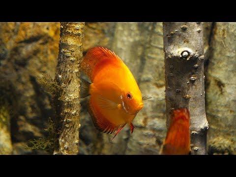 HOW TO Start an aquarium in 8 ways_Akvárium. Heti legjobbak