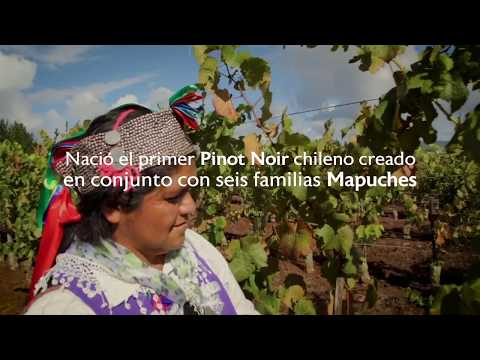 VSPT Wine Group – Sustentabilidad