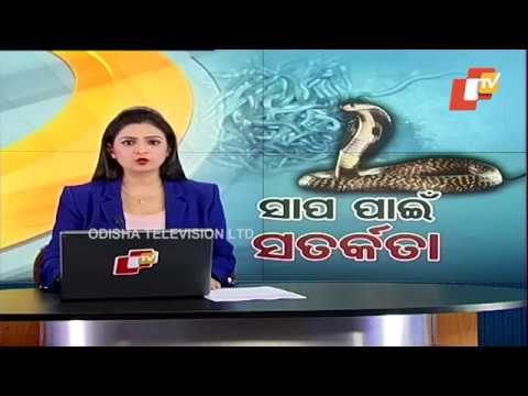 Video Bhadrak Snake Rescue Ops: Three More Adult Cobras Caught download in MP3, 3GP, MP4, WEBM, AVI, FLV January 2017