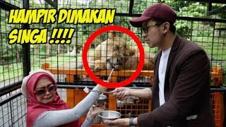 Video EXTREME! Bisa Deketan Langsung Sama Singa😱 MP3, 3GP, MP4, WEBM, AVI, FLV Januari 2019