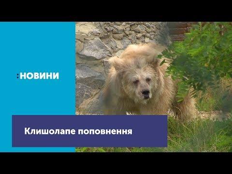 Клишолапе пополнения в Житомирском убежища для медведей