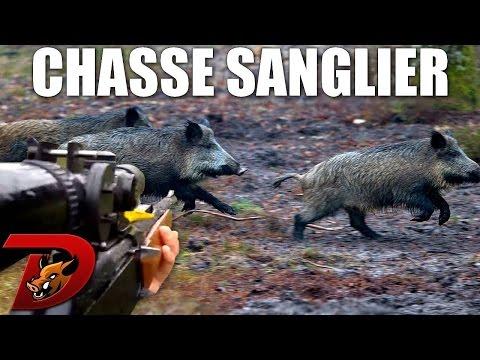 chasse - Retour sur la fin de saison 2013-2014 pour une nouvelle chasse aux sangliers ! Cette fois-ci, assistez à une vraie partie de cache cache avec trois petits sangliers (pas si petits que cela...