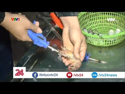 Bắt giữ cơ sở chuyên bơm tạp chất vào tôm tại Hải Phòng @ vcloz.com