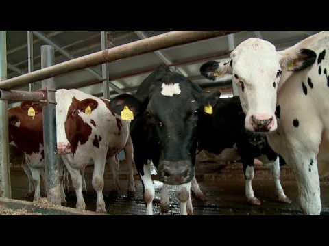 Робот-дояр® VMS™ DeLaval на ферме ПК Молоко