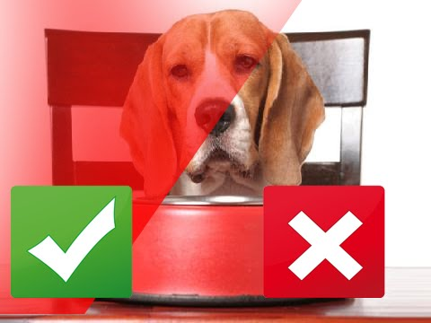 FATS AND OILS: GOOD FOR YOUR DOG'S HEALTH?