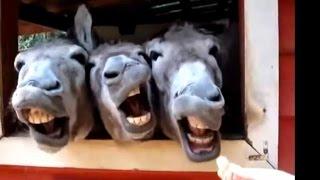 Video Zábavná Videa 2015 - Legrační Zvířata Dělat Legrační Zvuky Kompilaci MP3, 3GP, MP4, WEBM, AVI, FLV Juni 2017