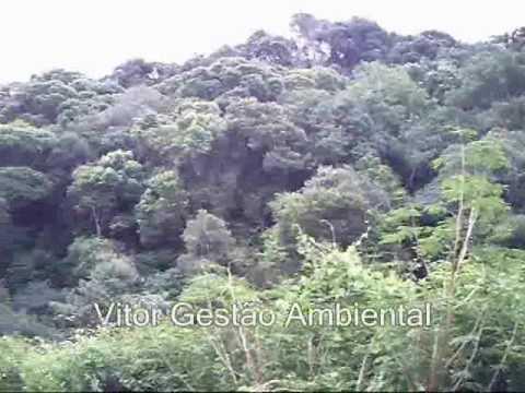 A Gestão Ambiental e a Policultura Versus Monocultura em Muliterno RS