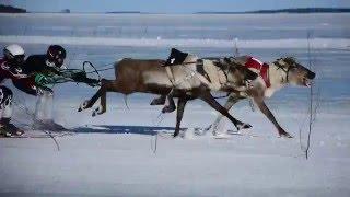 Inari Finland  City pictures : Porokuninkuusajot / Reindeer Race @ Inari, Finland