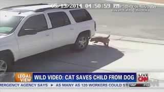 CAT saves BOY from DOG makes NEWS