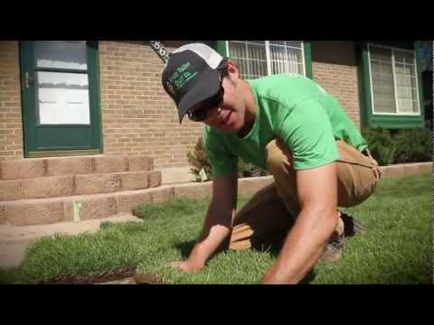 sod - Lawn Freaks ! How To Series. Shawn will guide you through the complete process of how to install sod in a small front yard. Where to start, stagger those sea...