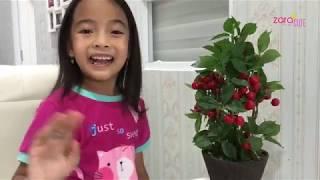 Video Zara Cute Berani | Cara aman Hadapi Hujan Petir di Rumah | Video Anak Indonesia MP3, 3GP, MP4, WEBM, AVI, FLV Desember 2018