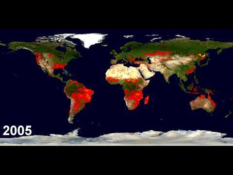 Incendios Que Ha Sufrido El Planeta En La Última Década