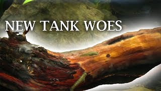 Fuzzy Driftwood, Algae Tank, and more by Rachel O'Leary