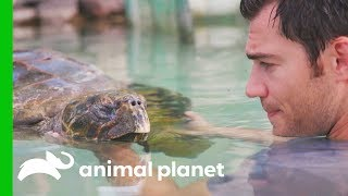 A Sea Turtle Named Tortilla Has A Buoyancy Issue | Evan Goes Wild: Passion and Purpose by Animal Planet