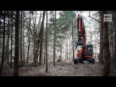 Holzarbeiten im Herrenneuen in Varel