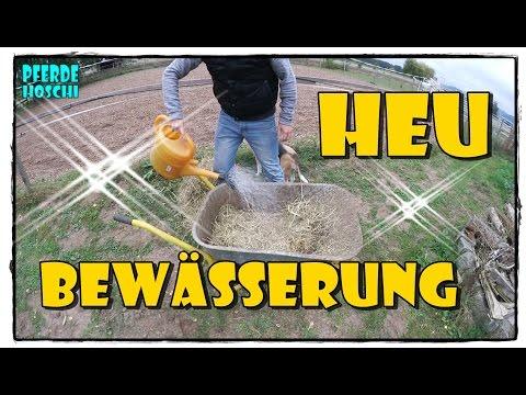 Heu Bewässerungs Maschine | Pferde Hoschi
