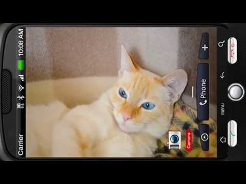 Video of Awakened Cute Cat at Home