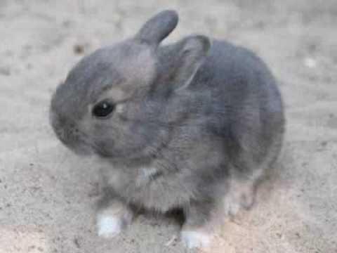 onze lieve konijntjes