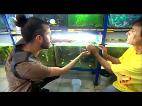 RÁJA – TV2 Édes élet Varga Viktor halat vásárol üzletünkben