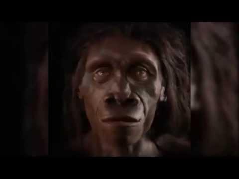 Ihmiskasvojen evoluutio 6 miljoonan vuoden aikana